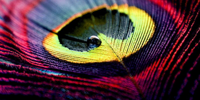 abstract-art-photography-drop-on-feather-hd-wallpapers