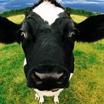 Planejamento no Agronegócio: Parceria Rural X Arrendamento Rural
