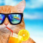 STF analisará em repercussão geral se incide contribuição previdenciária sobre o terço de férias